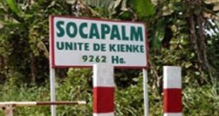 Socapalm030815650