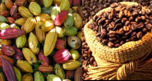 cacao-y-cafe
