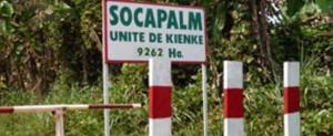 Socapalm-1170x480