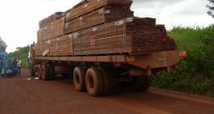 l-exploitation-forestiere-est-un-des-facteurs-de-la-degradation-des-forets-au-cameroun